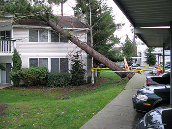 On Friday We Had A Really Big Wind Storm Lots Of Trees Came Down And Our Power Went Out For 24 Hours Found Later That The Winds Reached 69 Mph