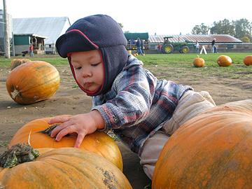 Pumpkin Inspector